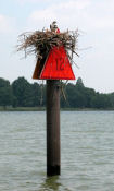 Channel marker on post with bird's nest.